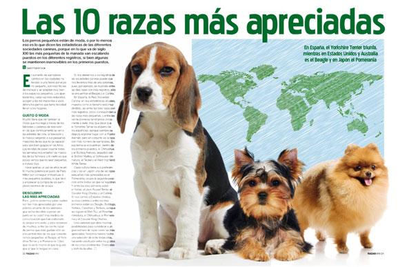 N Mero De Revista Perros Y Compa A Especial Grupo V