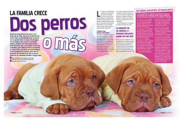N Mero De Revista Perros Y Compa A Grupo V