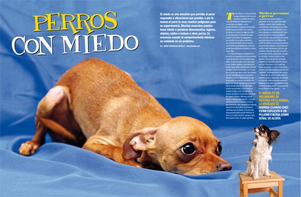 N Mero De Revista Pelo Pico Pata Grupo V